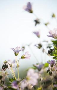 blogi_petravii_luonto